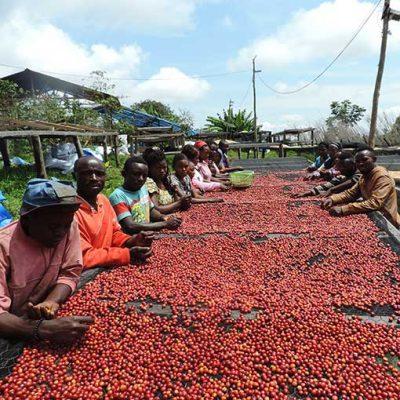 Congo Kivu Katanda