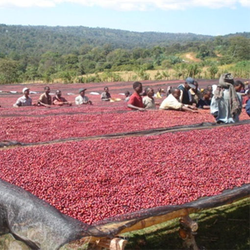 analysis of the coffee industry in ethiopia Coffee production system in ethiopia • forest coffee, • semi-forest coffee • at regional/ecx level internationally accepted attributes for analysis of both green coffee and themain challenges in ethiopian coffee industry • low productivity, low returns for farmers and poor agricultural practices.