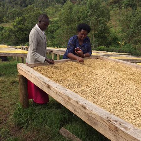 Kenya Boma